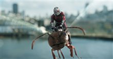 Ant-Man and The Wasp Photo 10
