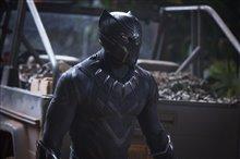 Black Panther Photo 17
