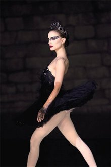 Black Swan Photo 11 - Large