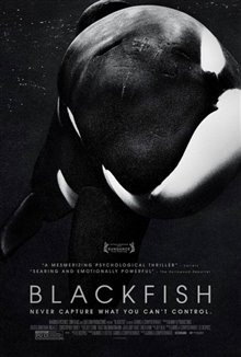Blackfish Photo 4