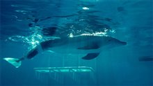 Dolphin Tale Photo 9