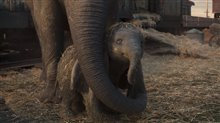 Dumbo Photo 22