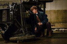 Fantastic Beasts and Where to Find Them Photo 13