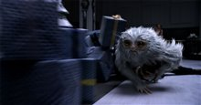 Fantastic Beasts and Where to Find Them Photo 19