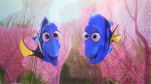 Finding Dory Photo 23