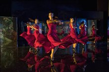 Flamenco, Flamenco Photo 11