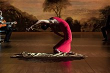 Flamenco, Flamenco Photo 21