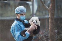 Pandas Photo 11