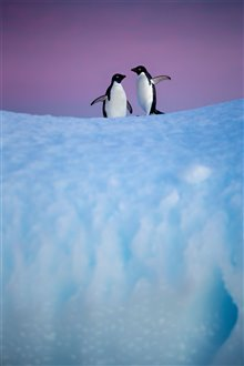 Penguins Photo 19