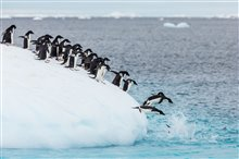 Penguins Photo 9