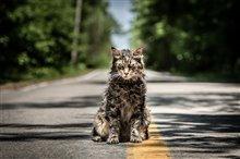 Pet Sematary Photo 7