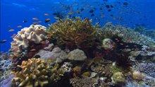 Sea of Life Photo 7