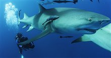 Sharkwater Extinction Photo 2