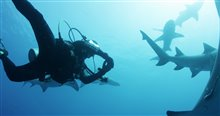Sharkwater Extinction Photo 7