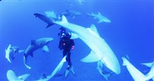 Sharkwater Extinction Photo 17