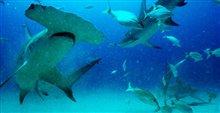 Sharkwater Extinction Photo 19