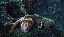 The Lion King Photo 5