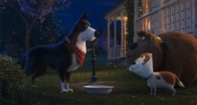 The Secret Life of Pets 2 Photo 3
