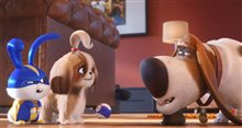 The Secret Life of Pets 2 Photo 19