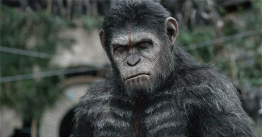 Dawn of the Planet of the Apes Photo 11 - Large