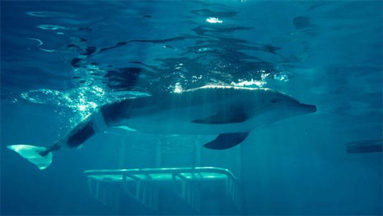 Dolphin Tale Photo 9 - Large
