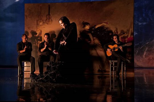 Flamenco, Flamenco Photo 15 - Large
