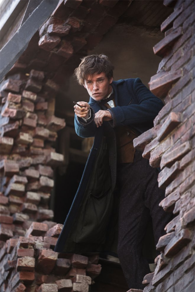 Fantastic Beasts and Where to Find Them Photo 59 - Large