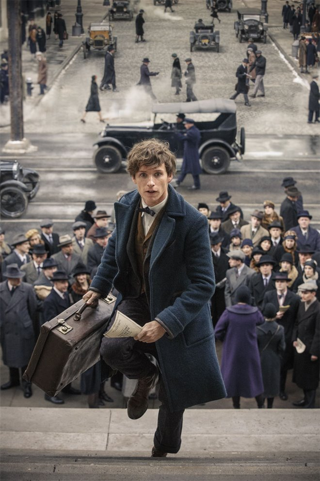 Fantastic Beasts and Where to Find Them Photo 60 - Large
