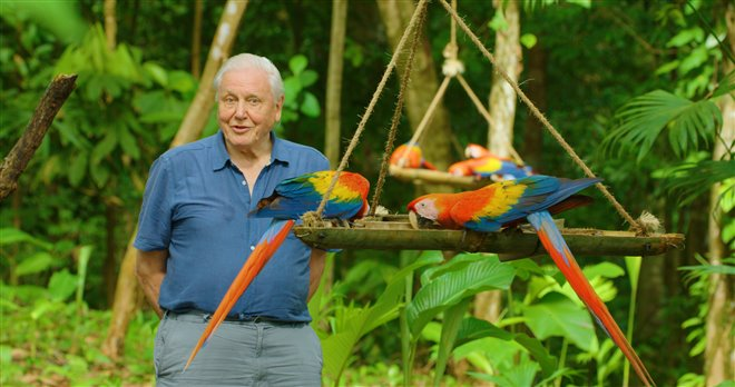 Life in Color with David Attenborough (Netflix) Photo 1 - Large