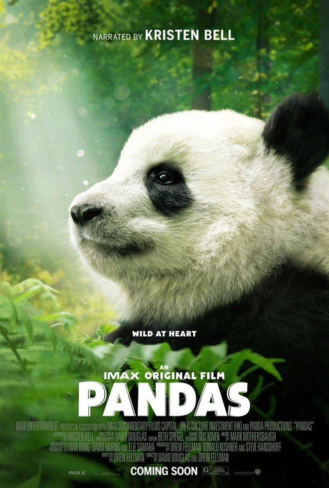 Pandas Photo 31 - Large