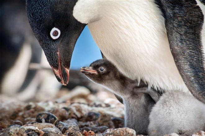 Penguins Photo 2 - Large