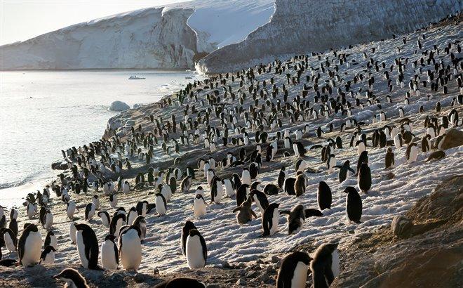 Penguins Photo 13 - Large