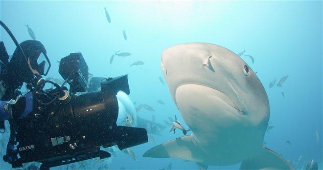 Sharkwater Extinction Photo 9 - Large