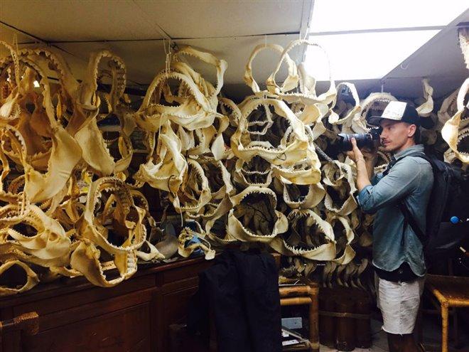 Sharkwater Extinction Photo 10 - Large