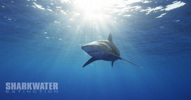 Sharkwater Extinction Photo 12 - Large