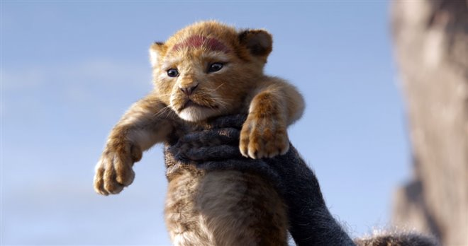 The Lion King Photo 3 - Large
