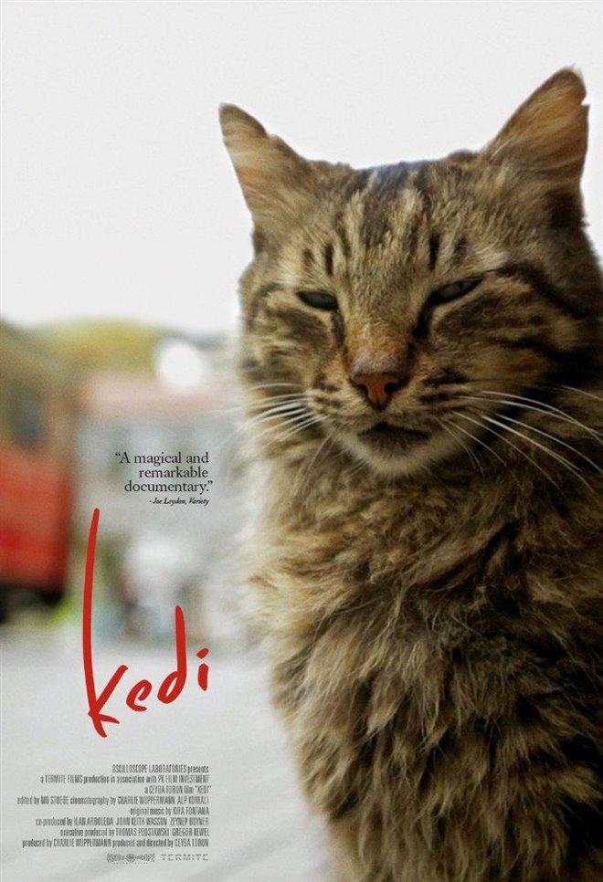 Kedi Large Poster